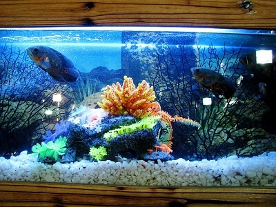 Distilled Water For Aquarium Top Home Apps