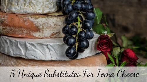 Toma cheese Substitute